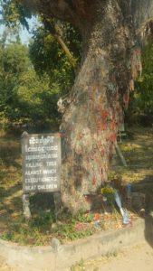 En este tronco mataban a los niños - Choung Ek