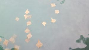 Desde el muelle se pueden ver golden rays